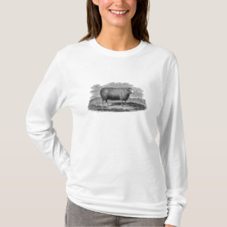 Vintage 1800s Sheep Ewe Illustration Retro Wool T-Shirt