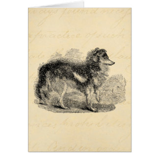 Vintage 1800s Shepherd's Dog - Sheep Dogs - Collie Card