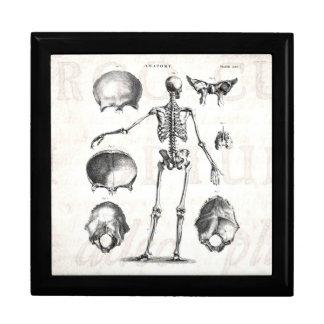 Vintage 1800s Skeleton Antique Anatomy Skeletons Gift Box