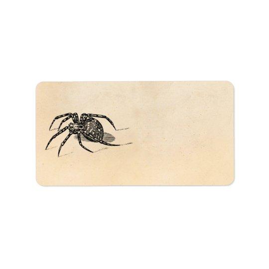 Vintage 1800s Spider Illustration Spiders Template Label