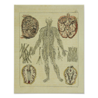 Vintage 1820 Nerves Brain Anatomy Art Print
