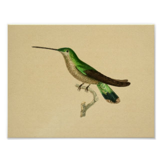 Vintage 1830 Hummingbird Print Green Blue