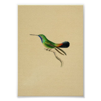 Vintage 1830 Hummingbird Print Red Green