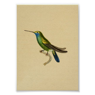 Vintage 1830 Hummingbird Print Yellow Blue