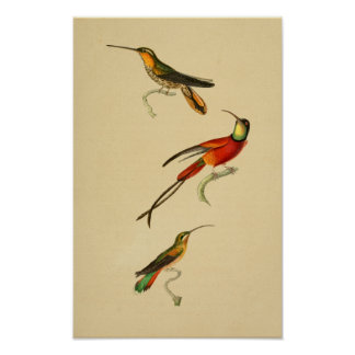 Vintage 1830 Hummingbirds Print Red Green