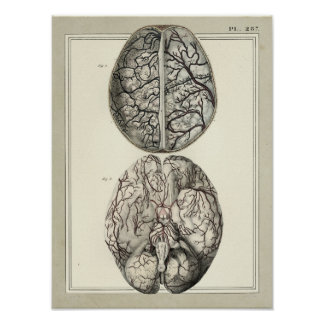 Vintage 1831 Brain Arteries Anatomy Print