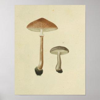 Vintage 1841 Brown Cap Mushrooms Art Print