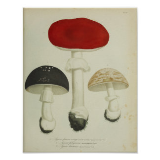 Vintage 1841 Red Black Mushrooms Art Print