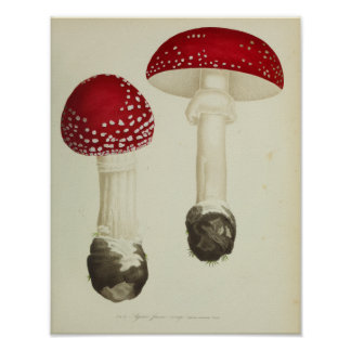 Vintage 1841 Red Cap Mushrooms Art Print