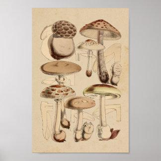 Vintage 1860 Mushrooms Varieties Brown Art Print