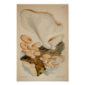 Vintage 1863 Brown White Log Mushrooms Art Print