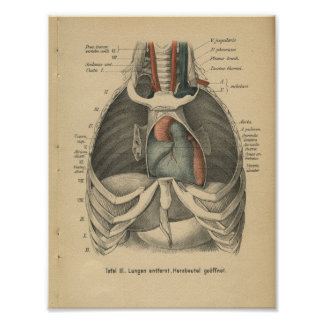 Vintage 1888 German Anatomy Print Heart