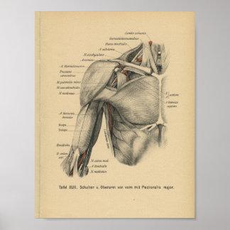 Vintage 1888 German Anatomy Print Shoulder Arm