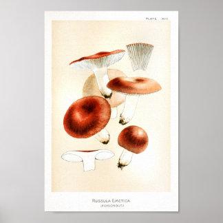 Vintage 1895 Mushrooms Russula Red Art Print