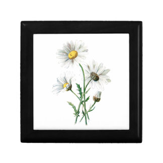 Vintage 1902 Daisies Old Wild Flower Illustration Gift Boxes