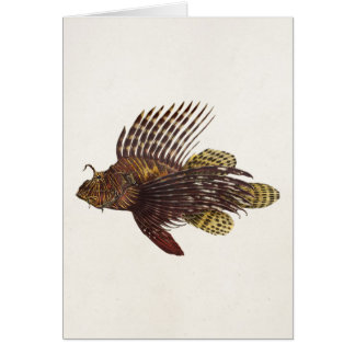 Vintage 1905 Lionfish Scorpionfish Retro Lion Fish Card