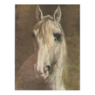 Vintage 1907 Illustration of White Horse Postcard