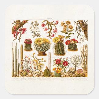 Vintage 1911 Cactus Flower Old Floral Illustration Square Sticker