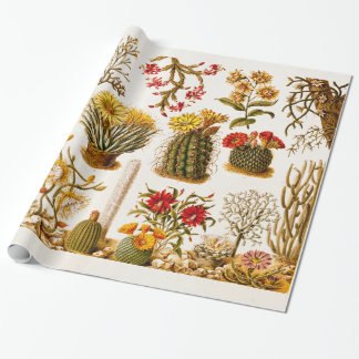 Vintage 1911 Cactus Flower Old Floral Illustration Wrapping Paper