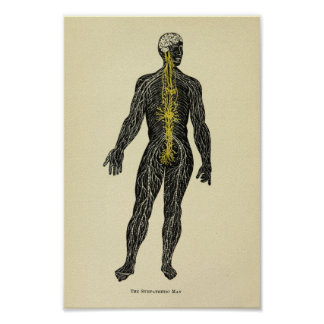 Vintage 1920 Sympathetic Nerves Anatomy Art Print