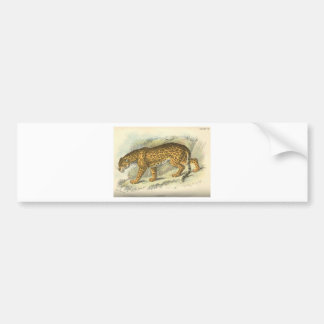 vintage 19th century jaguar illustration bumper sticker