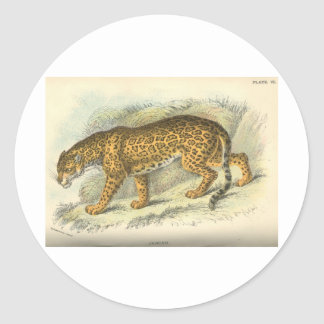 vintage 19th century jaguar illustration round sticker