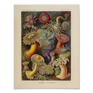 Vintage Actiniae Color Ernst Haeckel Art Print