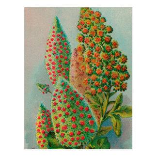 Vintage : agriculture advertising - postcard