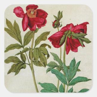 Vintage Albrecht Durer Peonies Sticker
