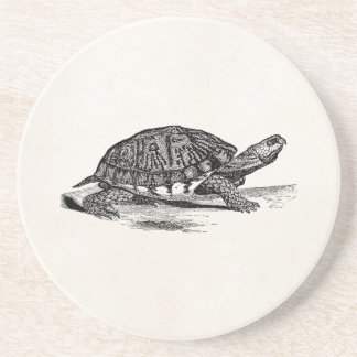 Vintage American Box Tortoise - Turtle Template Beverage Coasters