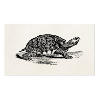 Vintage American Box Tortoise - Turtle Template Double-Sided Standard Business Cards (Pack Of 100)