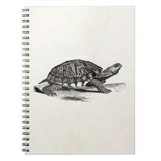 Vintage American Box Tortoise - Turtle Template Notebooks