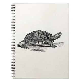 Vintage American Box Tortoise - Turtle Template Notebooks