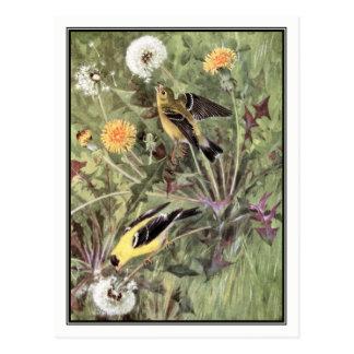 Vintage American Goldfinch - Robert Bruce Horsfall Postcard