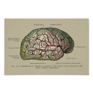 Vintage Anatomical Brain Anatomy Surface Print