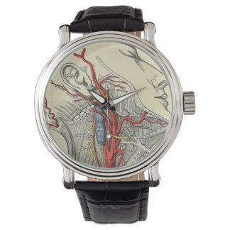 Vintage Anatomical Neck Illustration Drawing Watch