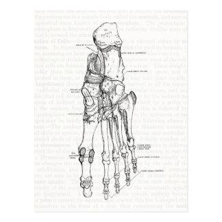 Vintage Anatomy Art Bones of the Foot Postcard