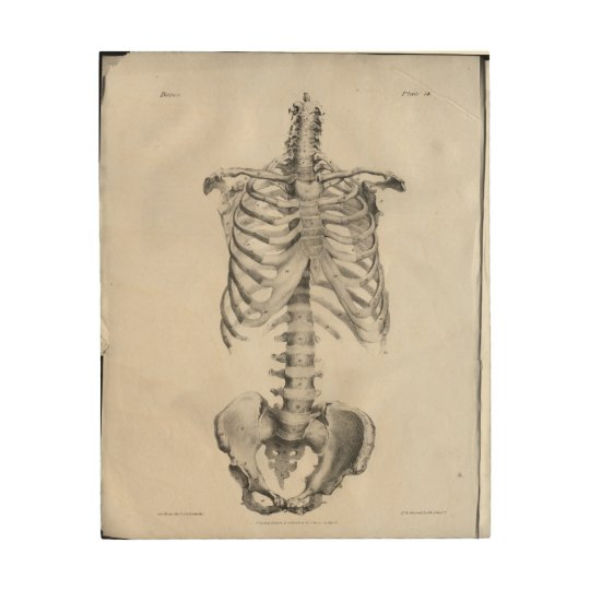 Vintage Anatomy Artwork Skeleton Wood Print