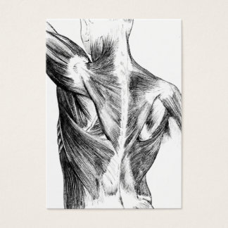 Vintage Anatomy | Back Muscles  (circa 1852) | B/W Business Card