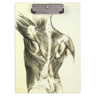 Vintage Anatomy | Back Muscles (circa 1852) Clipboard