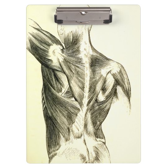Vintage Anatomy | Back Muscles (circa 1852) Clipboards