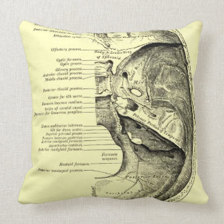 Vintage Anatomy | Base of the skull Inner surface Throw Pillow