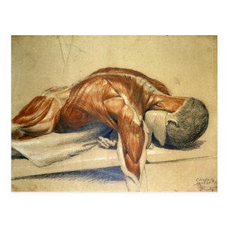 Vintage Anatomy Charles Landseer A Dissected Body Postcard