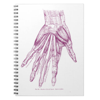 Vintage Anatomy Drawing Hand Muscles Purple Notebooks
