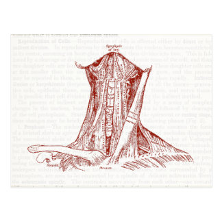 Vintage Anatomy Drawing Muscles Of The Neck Postcard