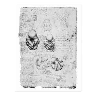 Vintage anatomy drawing of a fetus postcard