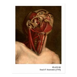 Vintage Anatomy   Head and Neck Postcard