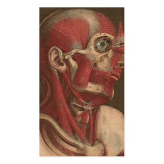 Vintage Anatomy | Head, Neck, and Shoulders Pack Of Standard Business Cards