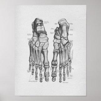 Vintage Anatomy Illustration Foot Bones Poster