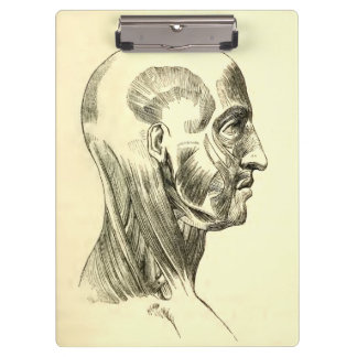 Vintage Anatomy | Muscles of the Head (circa 1852) Clipboard